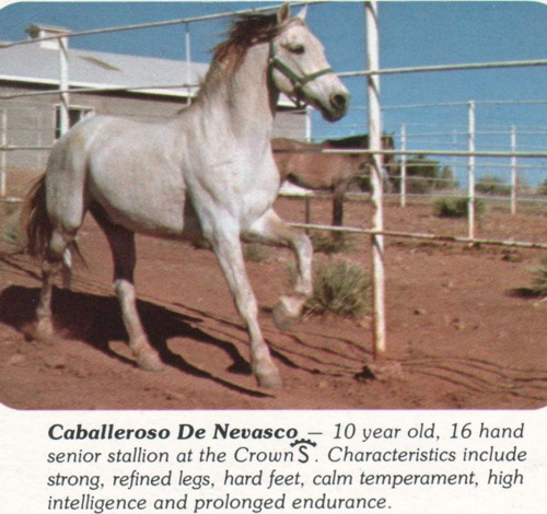 caballerosodenevasco.jpg