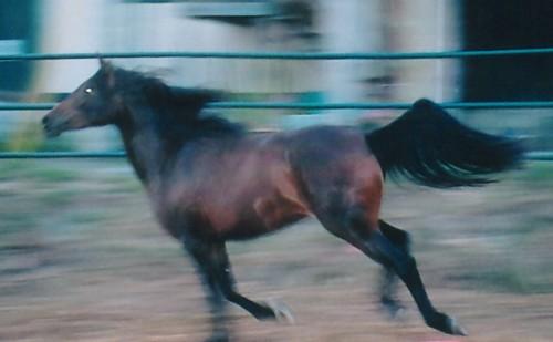 gallop.jpg