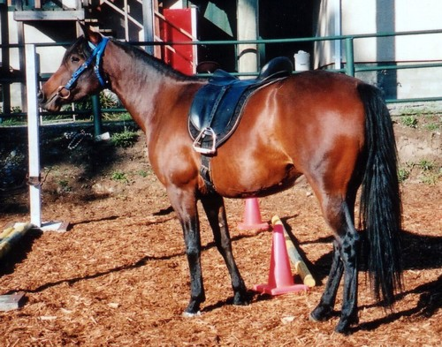 saddlebridle.jpg